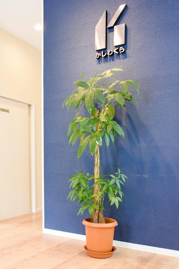 【梅雨の室内を彩る観葉植物】